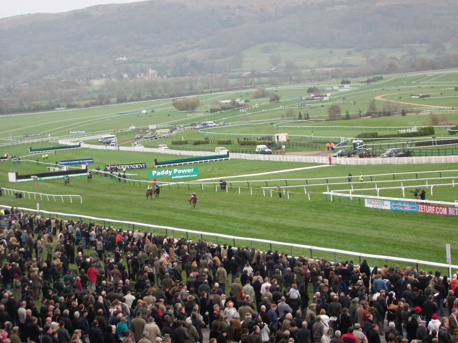 Cheltenham live streaming free